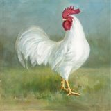 Noble Rooster I