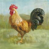 Noble Rooster II
