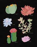 Succulent Chart V