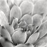 Garden Succulent I