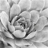 Garden Succulent IV