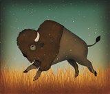 Buffalo Bison II