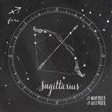Night Sky Sagittarius.