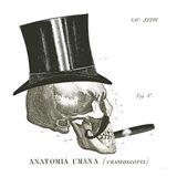 Dandy Bones III
