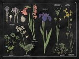 Botanical Floral Chart II Black and White