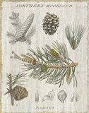 Woodland Chart III