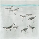 Sandpipers Gray