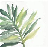 Tropical Palm III
