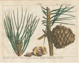 Antique Botanical XXI