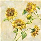 Farm Nostalgia Sunflowers