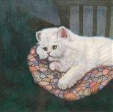 Kitten on Chair