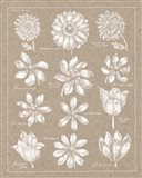 Anemone Plate II