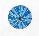 Navy Circular Shell