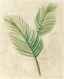 Sago Palm Leaves Neutral Crop