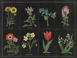 Botanical on Black Chart I