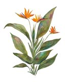 Bright Bromeliad