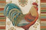 Rooster Rainbow IIIA
