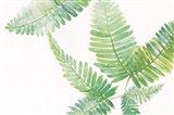Ferns I Square