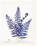 Botanical Fern IV Blue Light