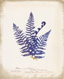 Botanical Fern IV Blue