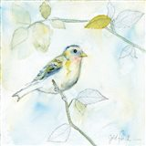 Sketched Songbird I