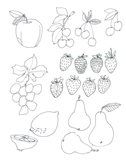 Line Art Fruits