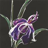 Iris on Black III