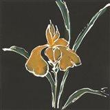 Iris on Black VI