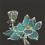 Lotus on Black I