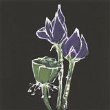 Lotus on Black II