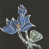 Lotus on Black VI