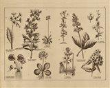 Botanical Floral Chart I Vintage