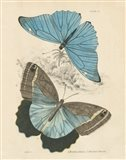 Assortment Butterflies I