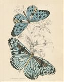 Assortment Butterflies II
