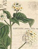 Botanique Bleu I Vintage