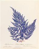 Botanical Fern XVIII Blue