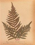 Botanical Fern XI