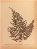 Botanical Fern XVIII