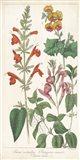 Salvia Florals I