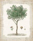 Garden Trees I - Ciste de Crete