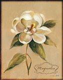 December Magnolia Vintage
