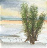Desert Yucca Cool