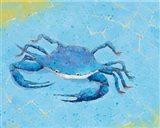 Blue Crab V
