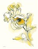 Carols Roses IV