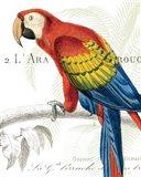 Parrot Botanique II