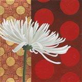 Morning Chrysanthemum I