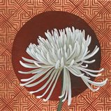 Morning Chrysanthemum III