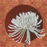 Morning Chrysanthemum III