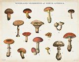 Mushroom Chart I light