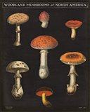Mushroom Chart III
